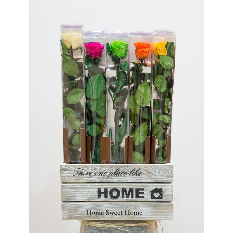 Rosas preservadas varios colores.